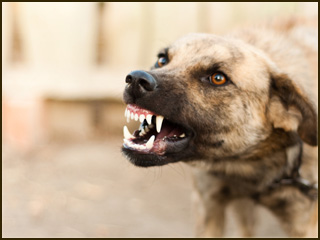 personal formulary animal bites Dog bites can result in serious injury learn about what victims are entitled to under michigan law we've helped dog bite victims recover damages for decades.
